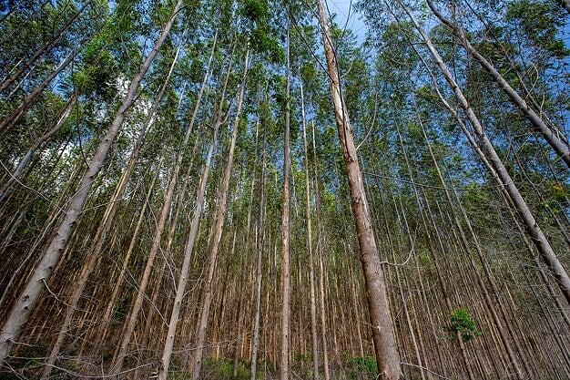Alvará para Licenciamento de Serviços Florestais - ALSF